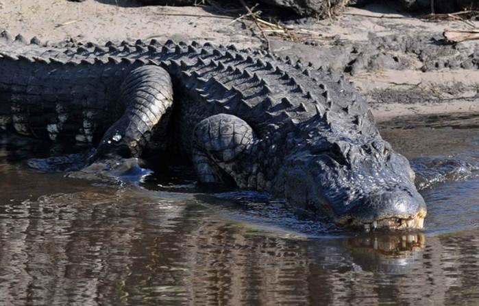 Невероятные гиганты! Самые крупные представители обычных животных