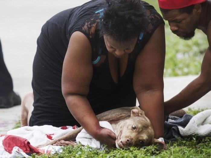 Собака отдала жизнь, чтобы спасти хозяйку