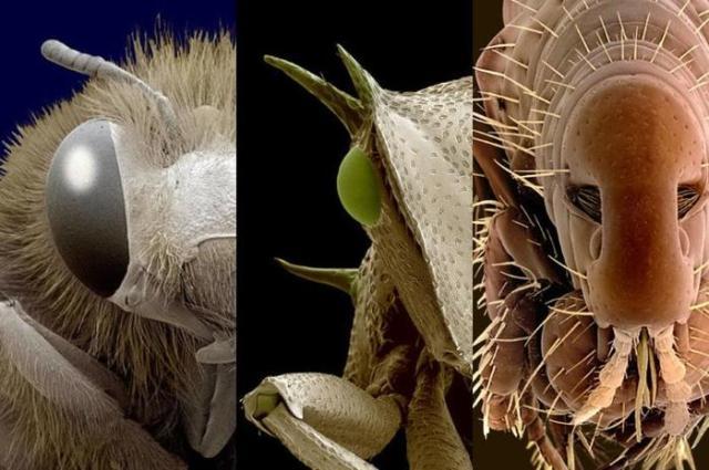 Удивительные пришельцы из микромира— фотографии насекомых