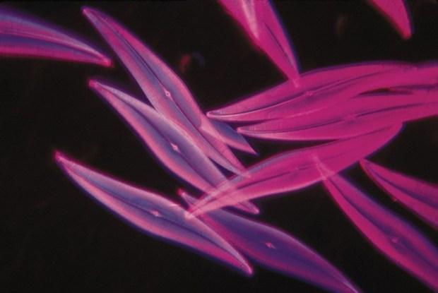 Ученые пока не раскрыли эти 10 секретов живой природы