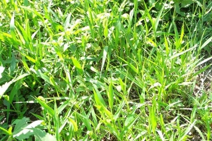Как убрать высокую траву с участка?