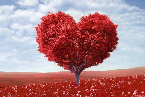 Эволюция— откуда любовь появилась на нашей прекрасной планете