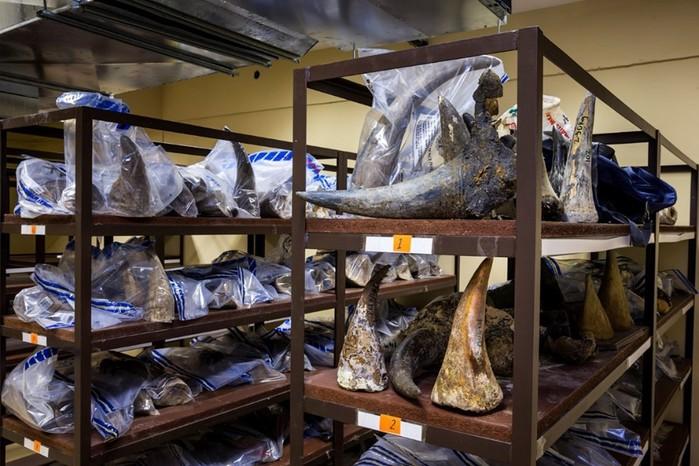 Фоторасследование: охота за рогом носорога