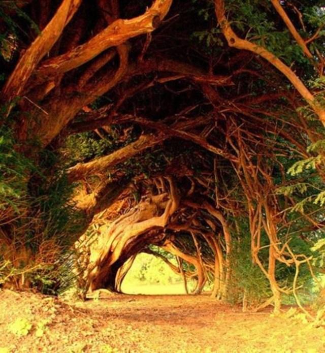 Самые красивые тоннели из деревьев