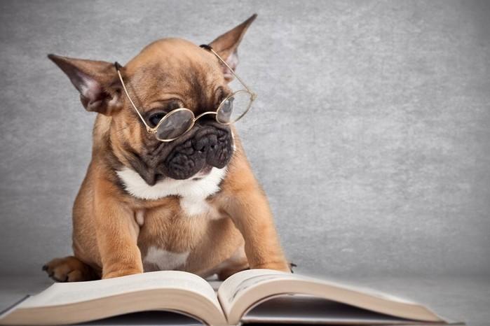 Понимают ли животные слова человека?