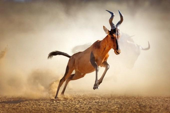 Животные рекорды в покорении высот
