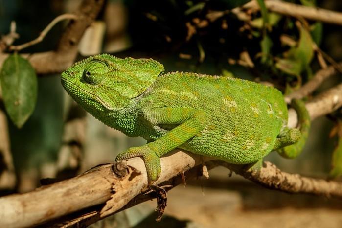 Любопытные факты о сексуальной жизни позвоночных животных