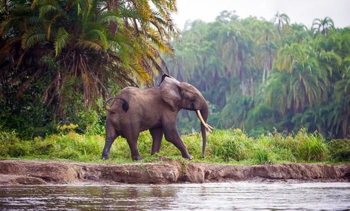 Самые чувствительные животные на планете