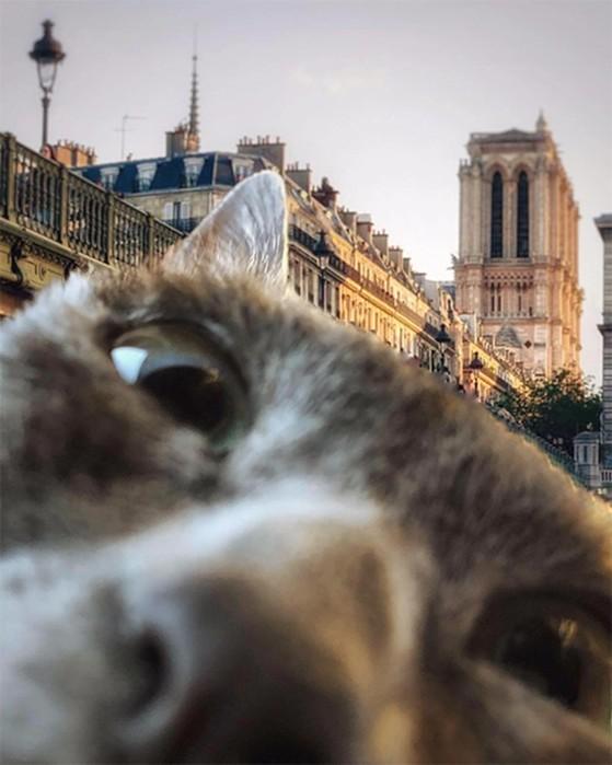 Радужные женщины и наглые коты: лучшие фотографии Instagram за февраль