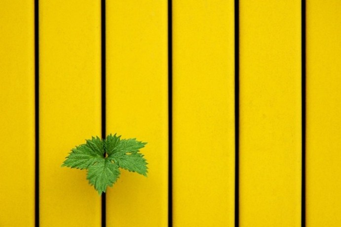 21 фотография для тех, кто понимает минимализм