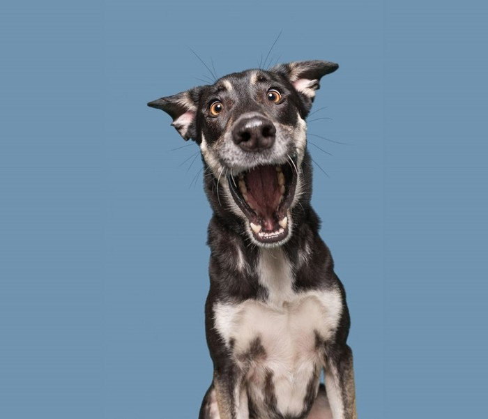 Элке Фогельсанг: фотографии с эмоциями собак