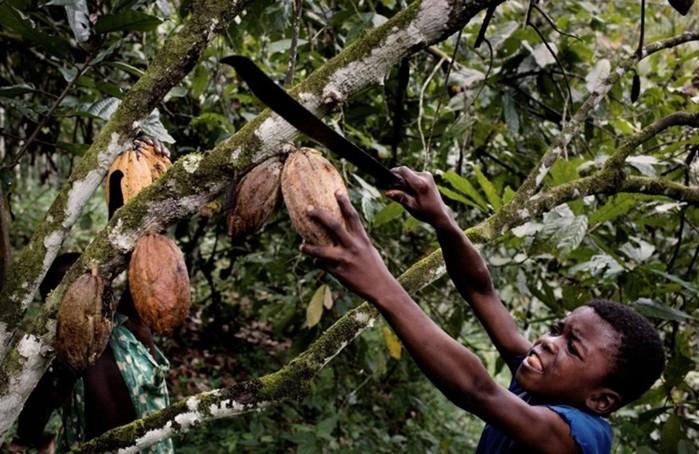 Современное рабство: как в 20 веке люди теряют свободу и работают за еду и кров