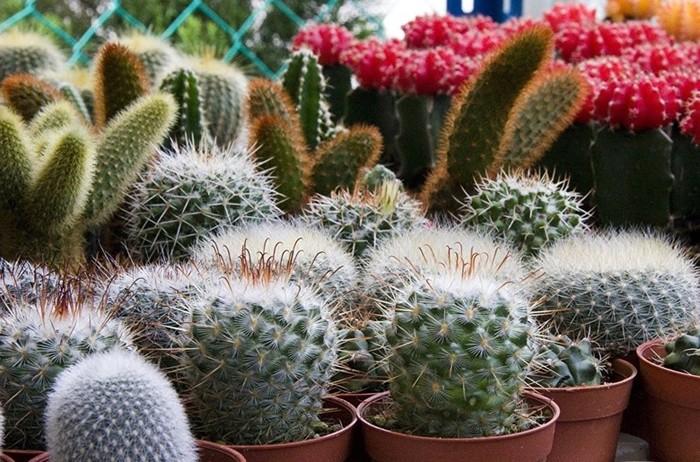 Опасность на подоконнике: пять самых вредных комнатных растений