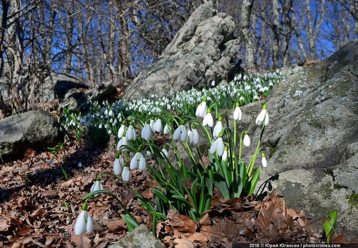 Весенние цветы, или Зачем ехать в Крым в марте