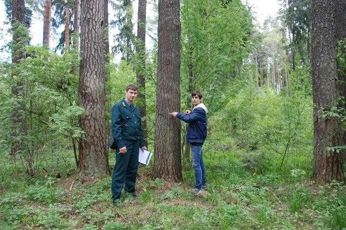 Что такое лесоводство и кто в нем лидирует