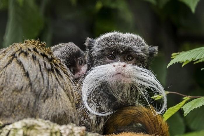 Самые необычные животные, о которых вы могли даже не слышать