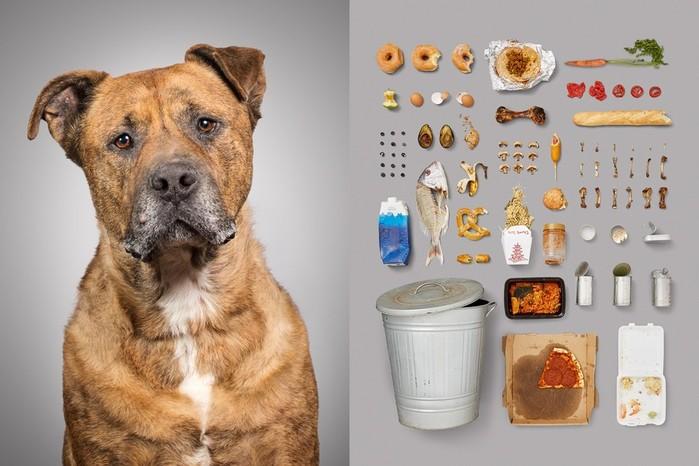 Собаки и их пожитки: американка показала всю суть собачьей жизни