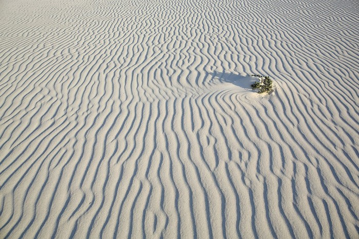 Загадочный мир острова Сокотра в Индийским океане