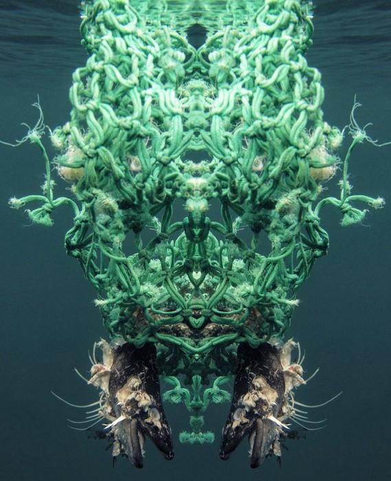 Неземная красота: тайная жизнь океанского мусора