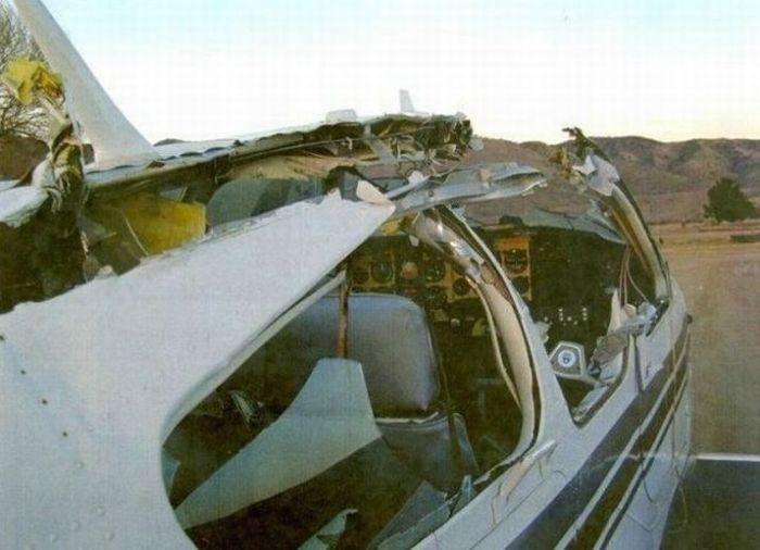 Какие птицы самые опасные для военных самолетов