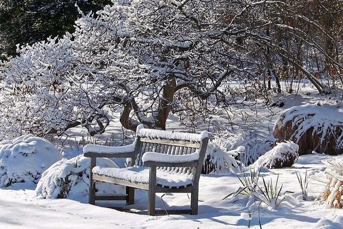 Зимние занятия для ландшафтного дизайнера