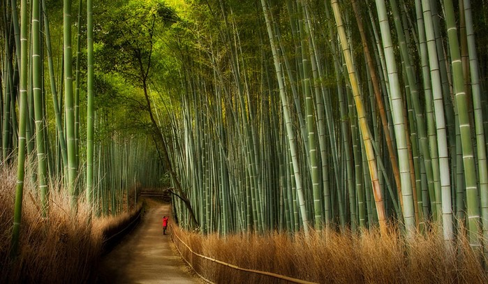 Прогулка по знаменитой японской бамбуковой роще в Киото