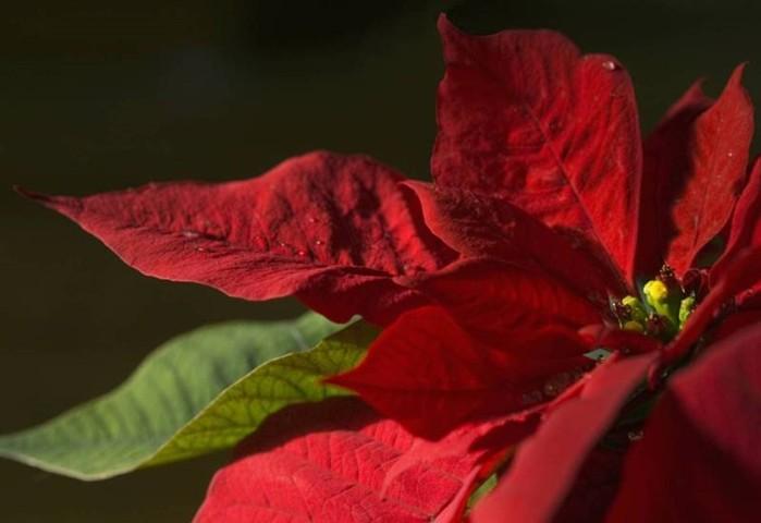 Смертельно опасные цветы, которые мы держим рядом с собой