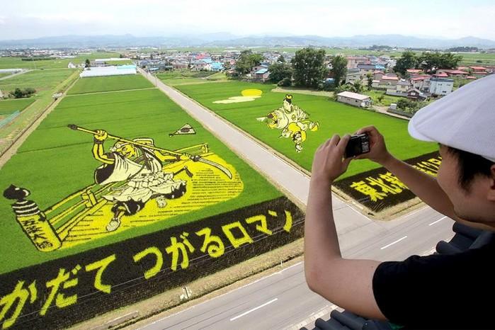 Картины на рисовых полях в Японии: оригинальный способ привлечения туристов