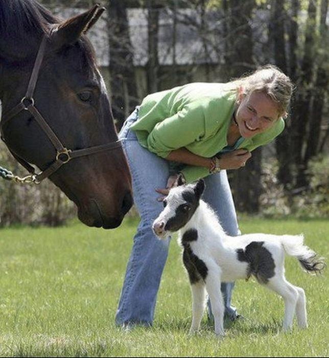 Самая маленькая лошадка в мире: фотографии Эйнштейна