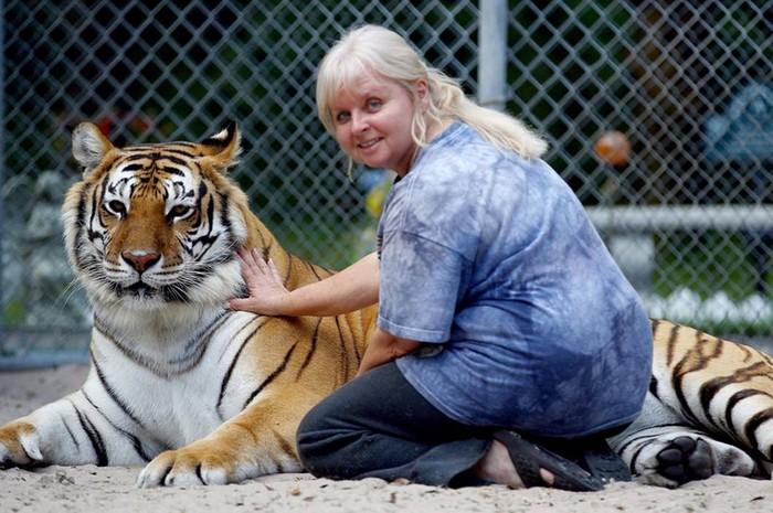 Тигры: многие «факты» об этих хищниках не соответствуют действительности