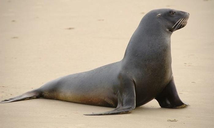 Тюлени: так ли хорошо приспособлены к жизни в воде? Интересные факты