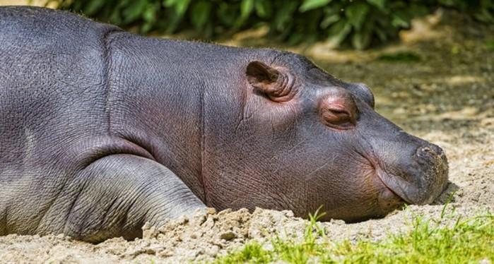 Какие животные долго спят? Рекордсмены животного мира по продолжительности сна
