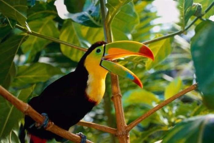 Плачущий и другие попугаи (фото и видео)