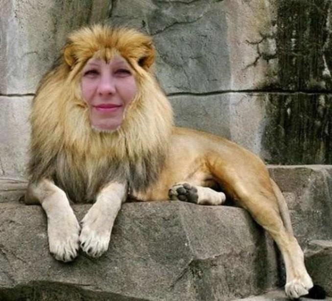 Лев гермафродит?