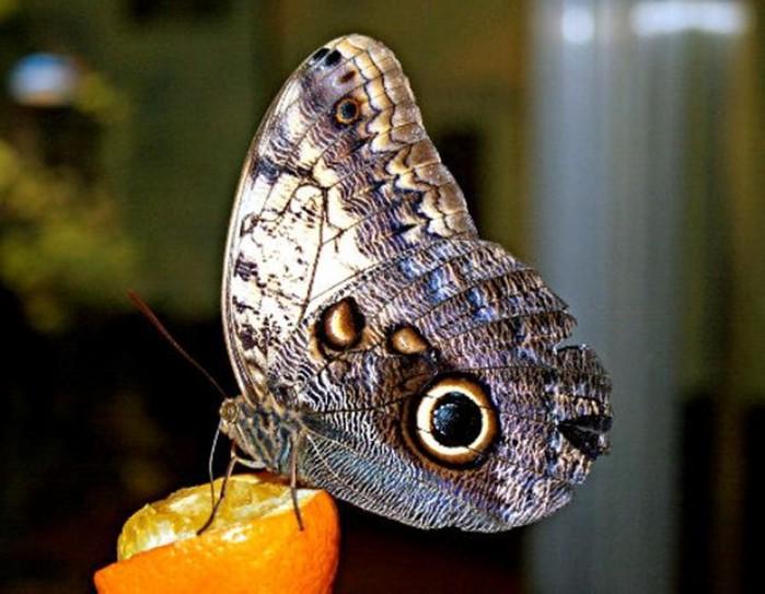 Туристу на заметку: Где можно посмотреть бабочек