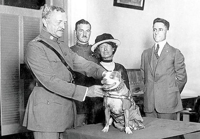 Сержант Стабби— героический пес Первой мировой войны