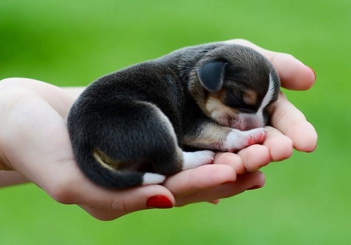 Маленькие животные, которые помещаются на ладони