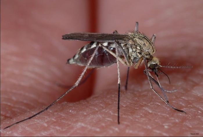 Почему комары кусают вас больше других?