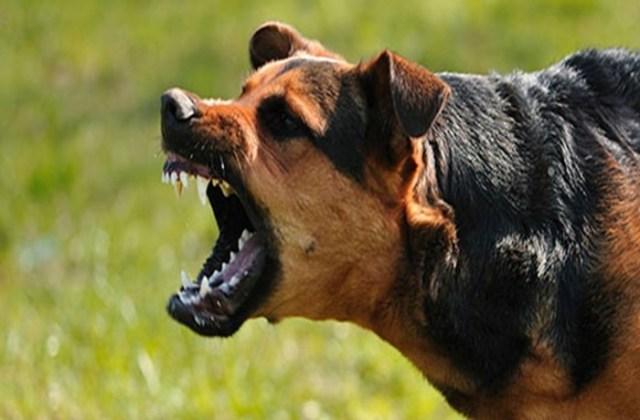 Что такое бешенство и как отличить бешеное животное от здорового?