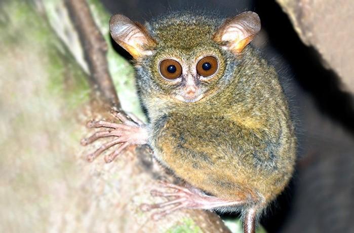 Новые виды животных, открытые в 2017 году