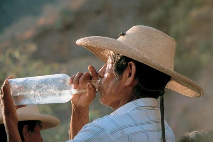 Текила   душа Мексики. Один из самых популярных напитков в мире