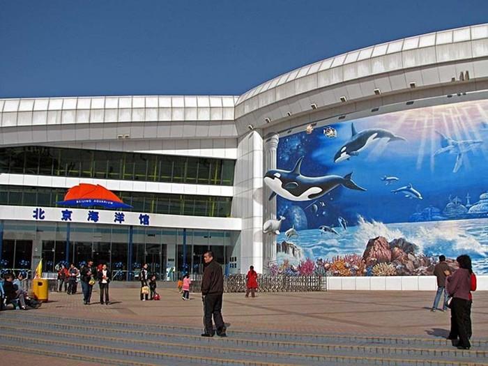 Невероятный Аквариум в Пекине