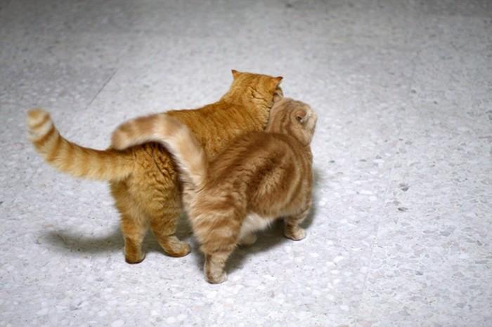 Любовь никак не скроешь: что может поведать кошачий хвост
