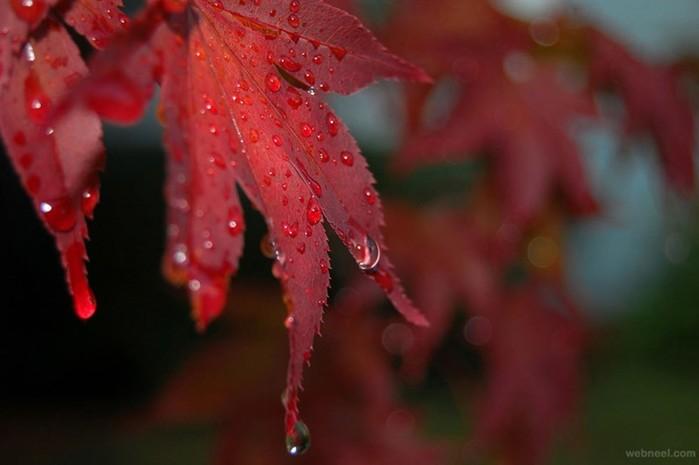 Примеры для вдохновения: как снимать фотографии с дождем