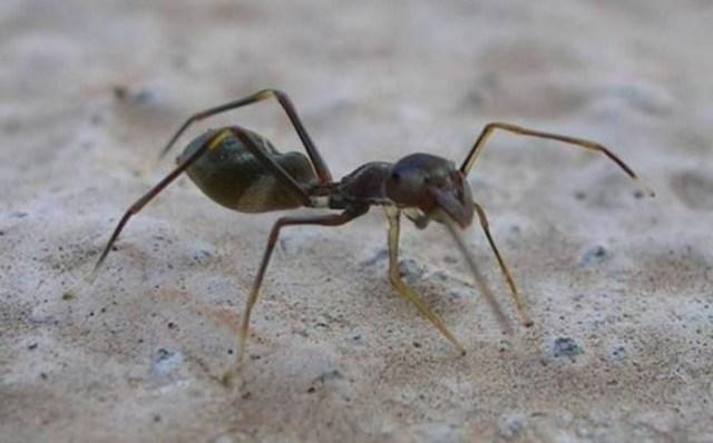 Почему пауков нельзя называть насекомыми