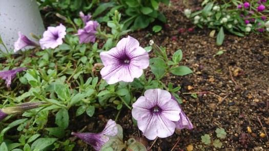 てあて屋よしの庭に咲く花 10