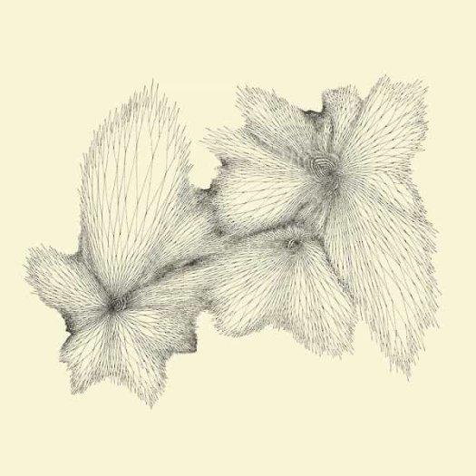EYVIND KANG / Plainlight (LP)