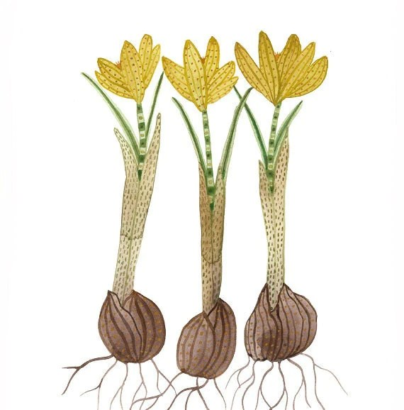 Golden Crocuses original watercolor painting