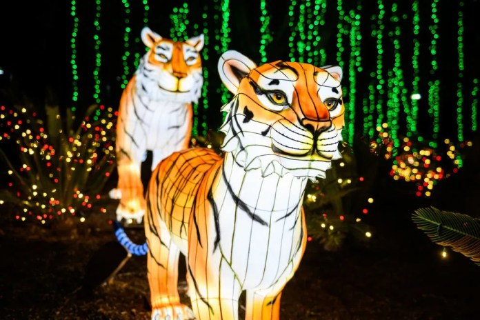 These zoos are known for their family-friendly lights shows