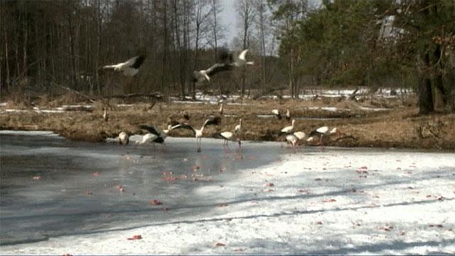 В Польше прошли сильные снегопады